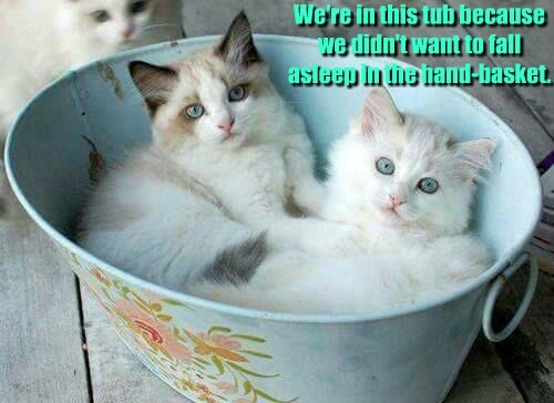 Cats - 8747015936