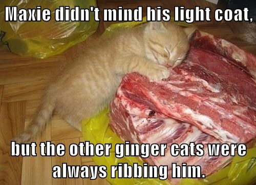 Maxie didn't mind his light coat,  but the other ginger cats were always ribbing him.