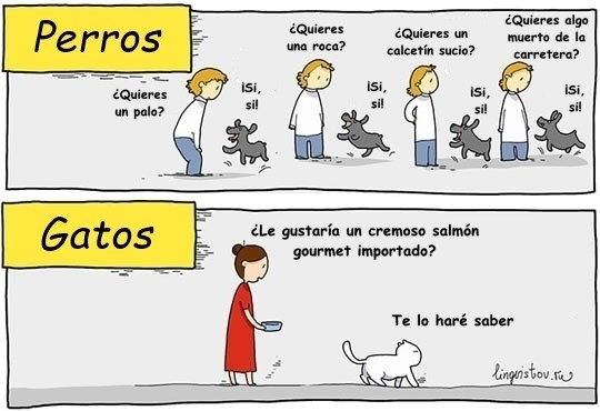 diferencias perros gatos