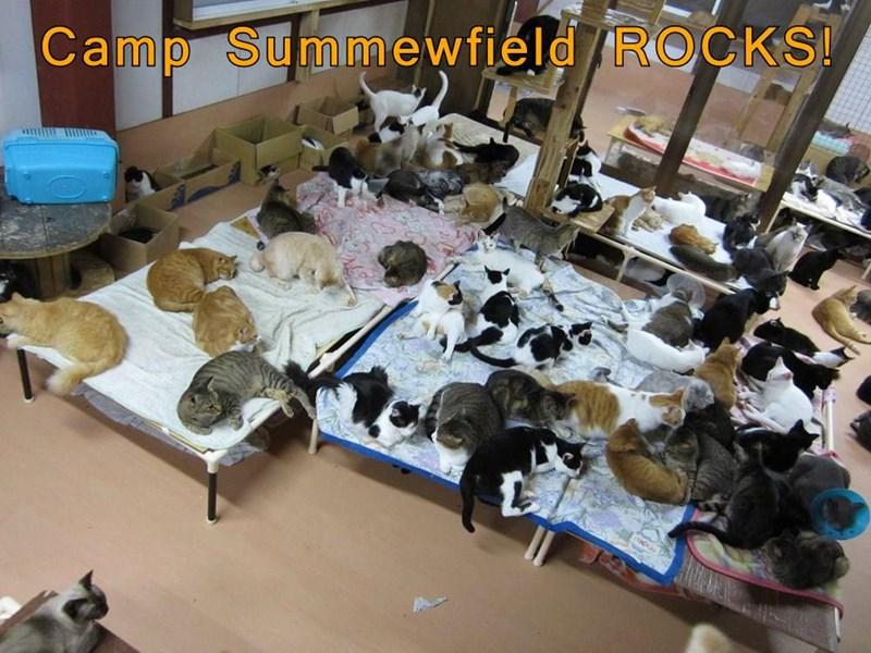 animals - 8747111424