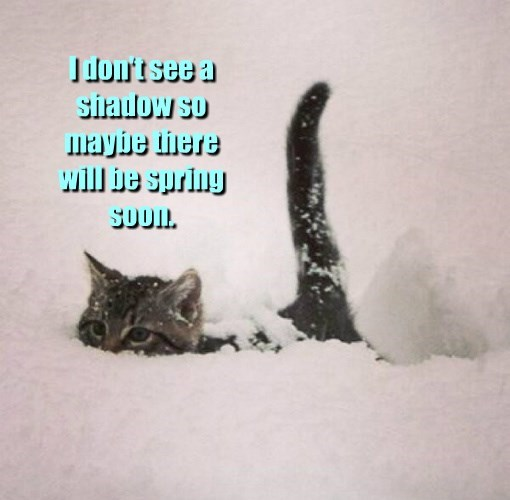 spring,shadow,see,SOON,kitten,dont,caption