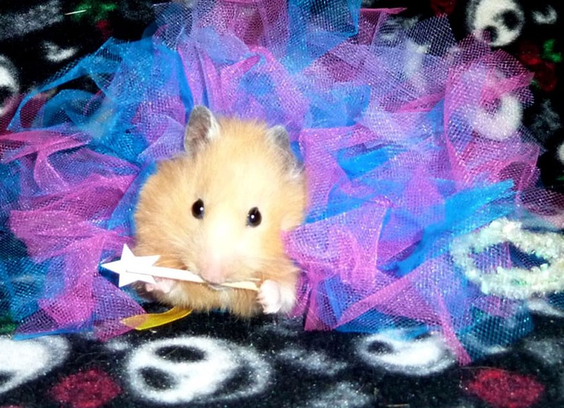 My Little Hamster Princess