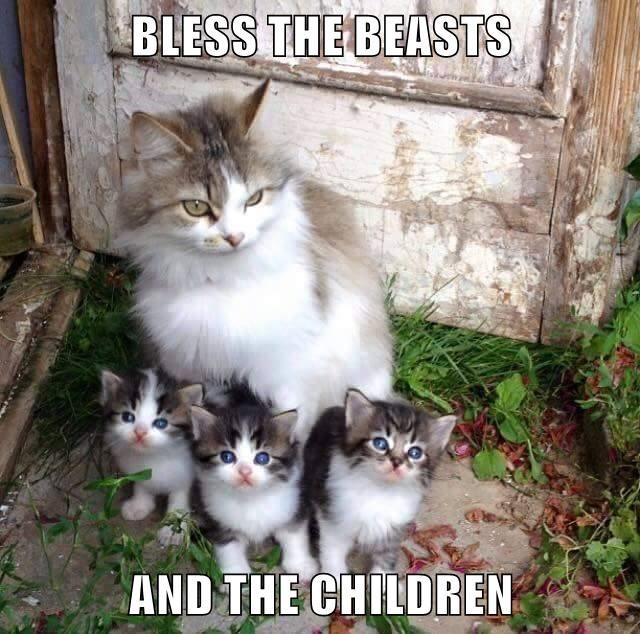 animals Cats - 8747182080