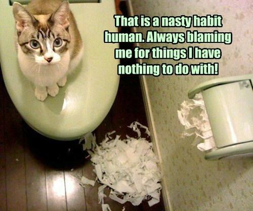 cat toilet paper - 8747234816