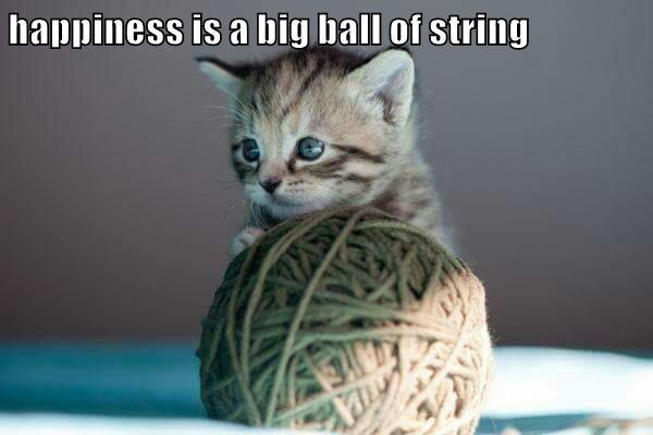 animals ball kitten string caption happiness - 8747280896