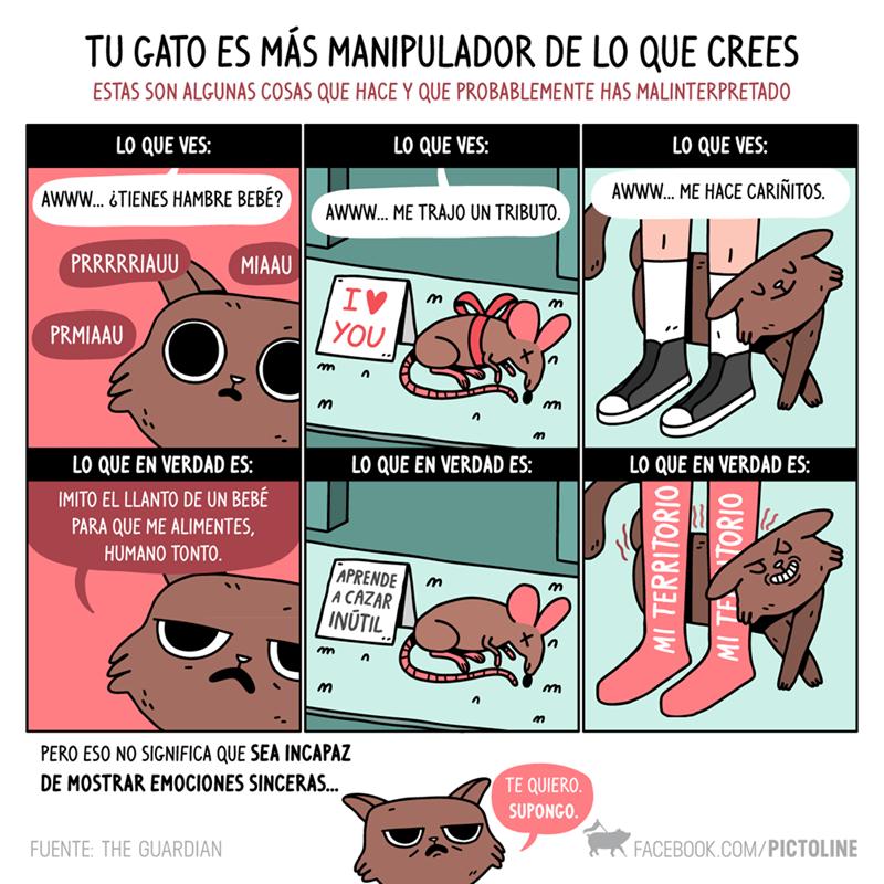 gato manipulador