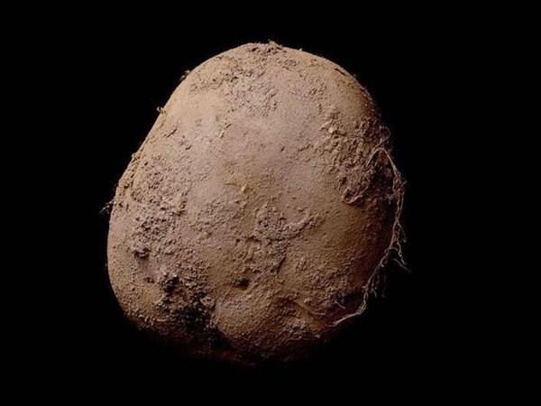 art potato This Picture of a Potato is Worth €1 Million