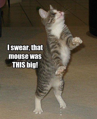 cat swear big caption this mouse - 8747328768