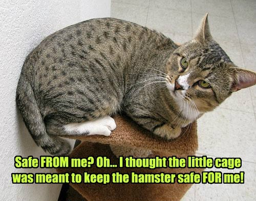 cat safe thought me cage hamster caption - 8747337728