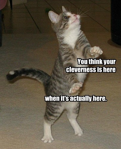 cat here think actually cleverness caption - 8747400448