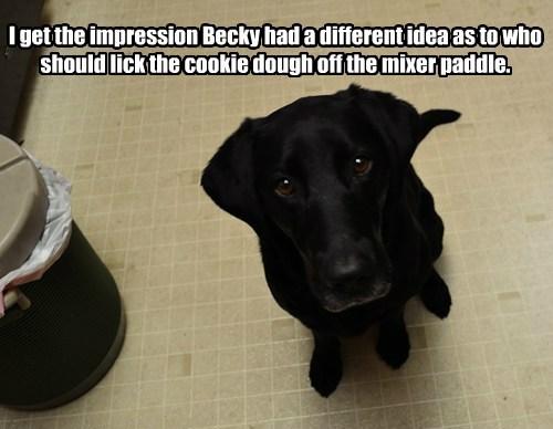 dogs mixer cookie dough lick caption - 8747439360