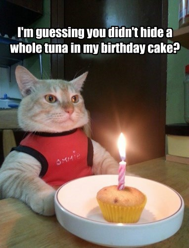 cat tuna guessing didnt hide birthday cake caption - 8747567872