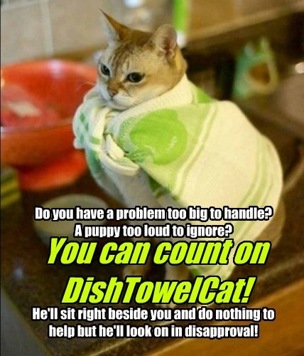 You can count on  DishTowelCat!
