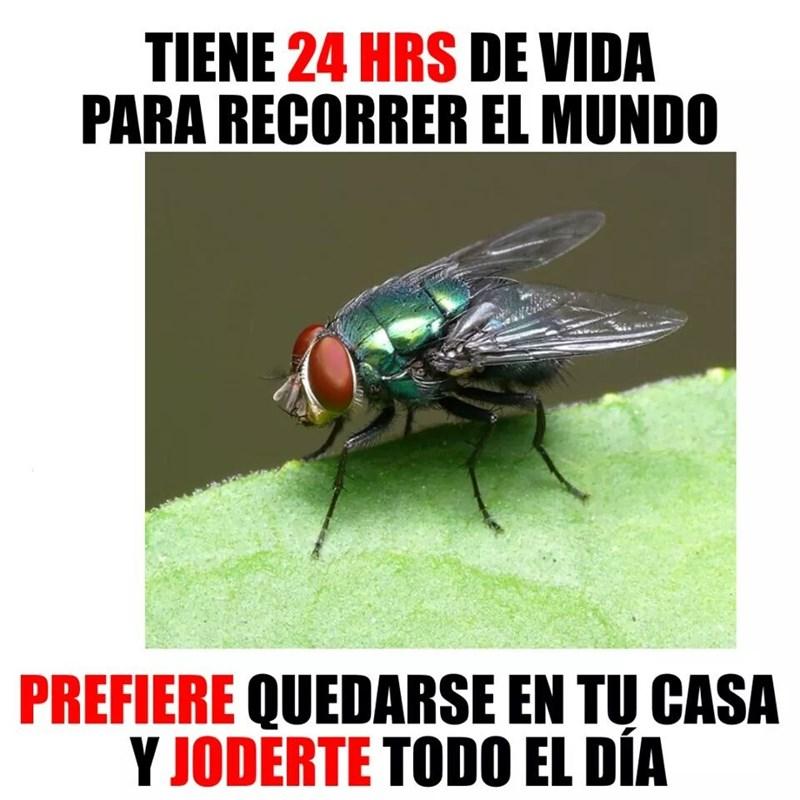 moscas de mierda