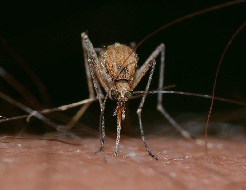 zika virus STD Oh Good, The Terrifying Mosquito-Transmitted Zika Virus Is Now an STD