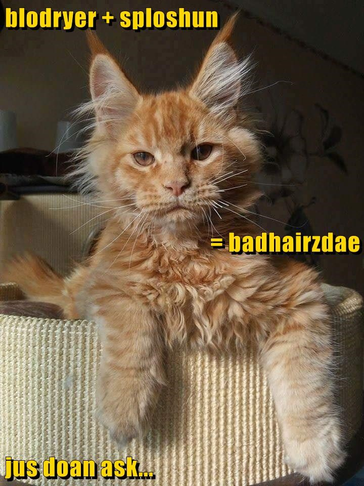 animals bad hair day caption Cats math - 8747701760