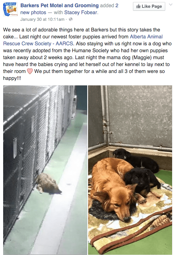cute dog image momma dog consoles crying puppies in shelter
