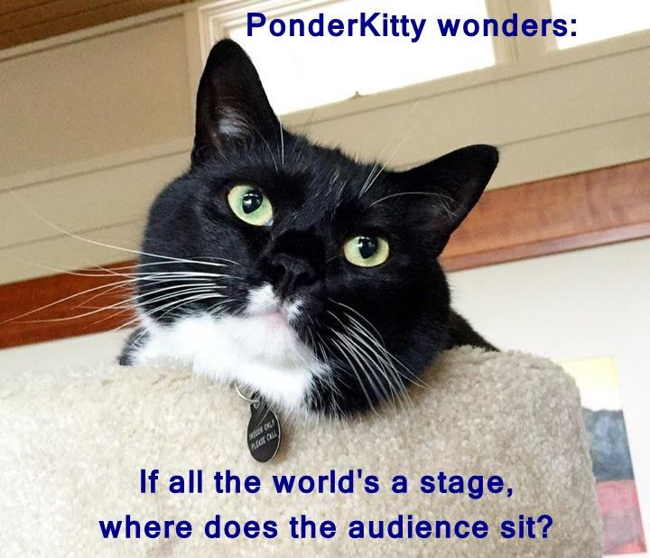 PonderKitty wonders:  If all the world's a stage,                                        where does the audience sit?
