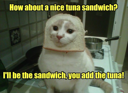 cat tuna sandwich caption