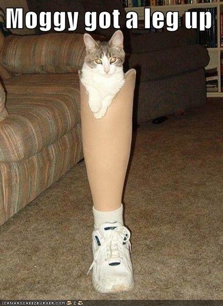 Moggy got a leg up