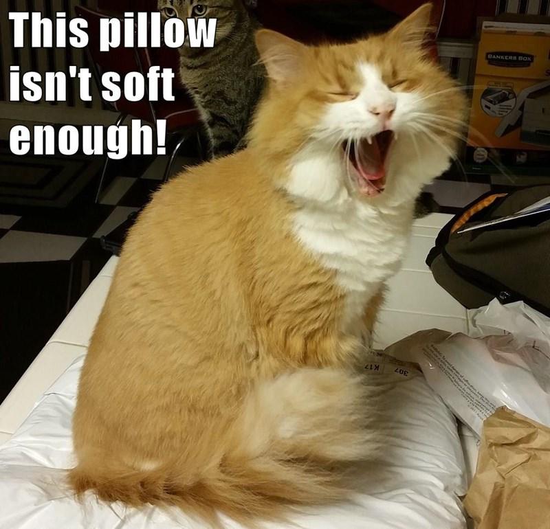 animals Pillow caption Cats - 8748196352