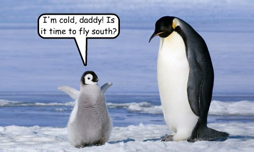I'm cold, daddy! Is it time to fly south?