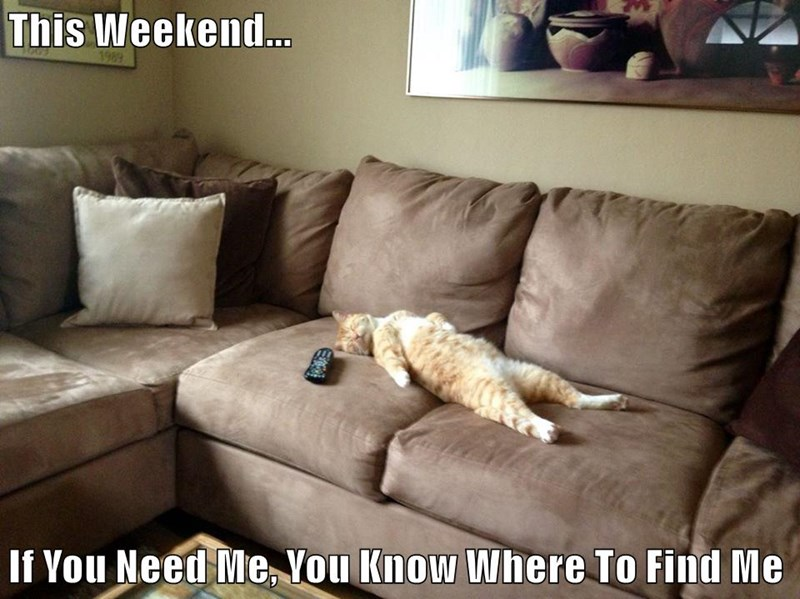 animals cat weekend caption couch - 8748275200