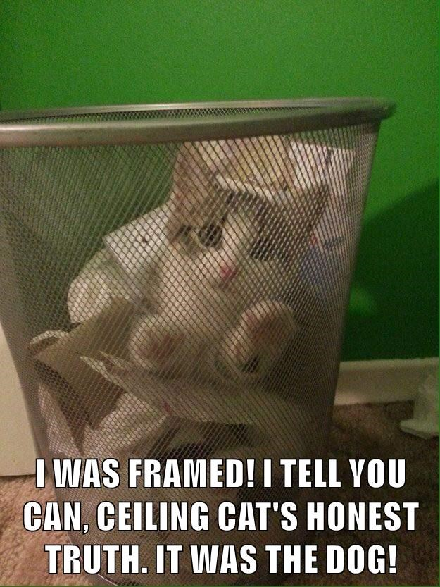 I WAS FRAMED! I TELL YOU CAN, CEILING CAT'S HONEST TRUTH. IT WAS THE DOG!