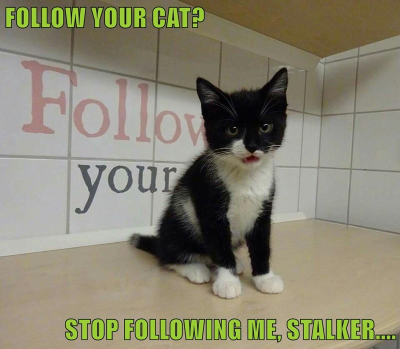 FOLLOW YOUR CAT?  STOP FOLLOWING ME, STALKER....