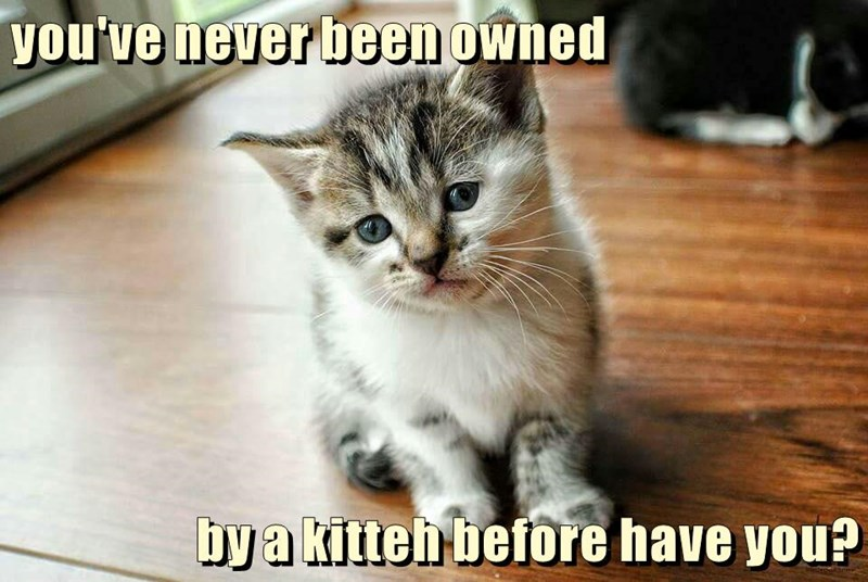 you've never been owned  by a kitteh before have you?
