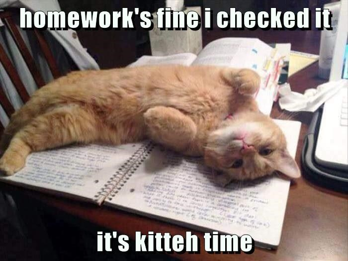 homework's fine i checked it   it's kitteh time