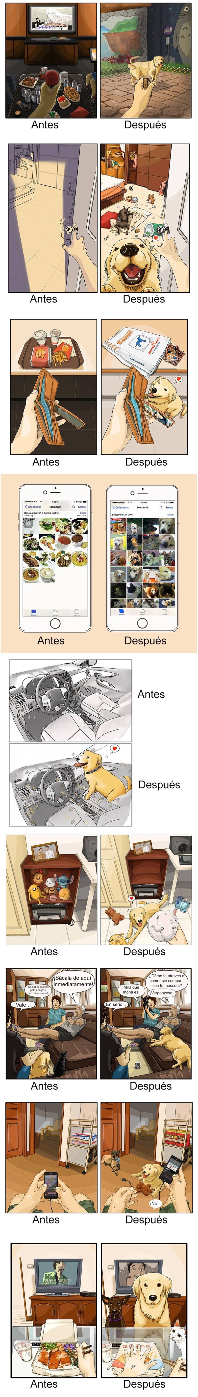 vida antes de perro