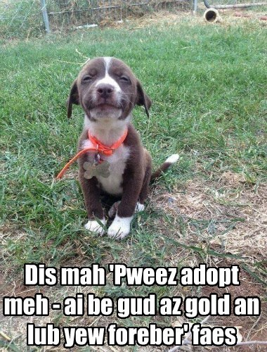 adopt dogs face forever gold please love good caption - 8748392704