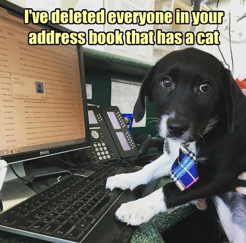 cat dogs address everyone deleted book has caption