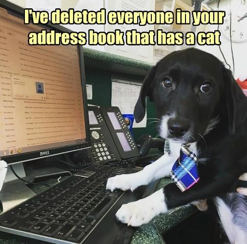 cat everyone book has caption - 8748403712