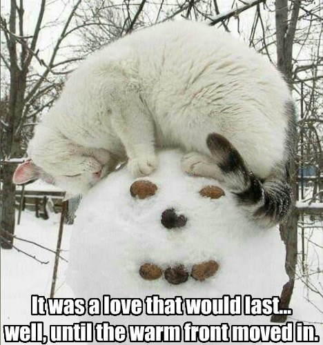 caption Cats snowman - 8748475392