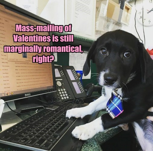 caption dogs mailing valentines romantic Mass marginally