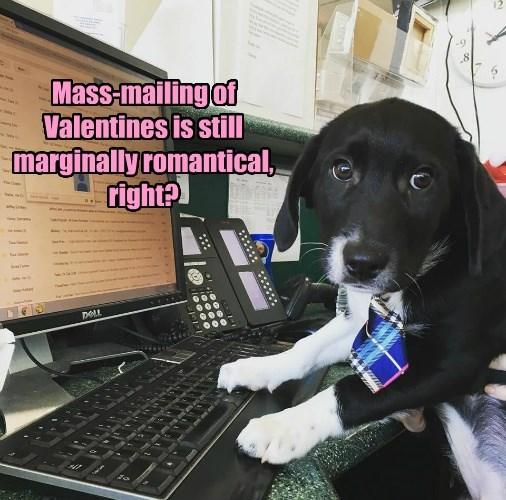 caption dogs mailing valentines romantic Mass marginally - 8748579584