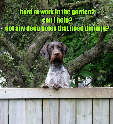 hard at work in the garden? can i help? got any deep holes that need digging?
