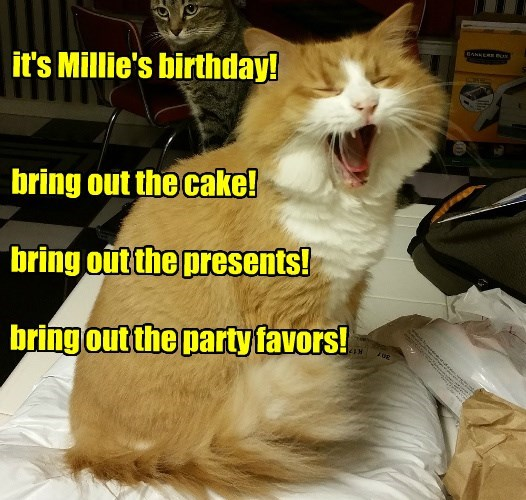 happy birthday memes it's Millie's birthday!bring out the cake!bring out the presents!bring out the party favors!