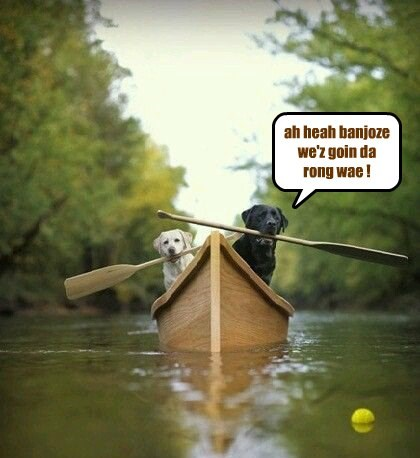 dogs,row boat,wrong,way,caption,banjos,going