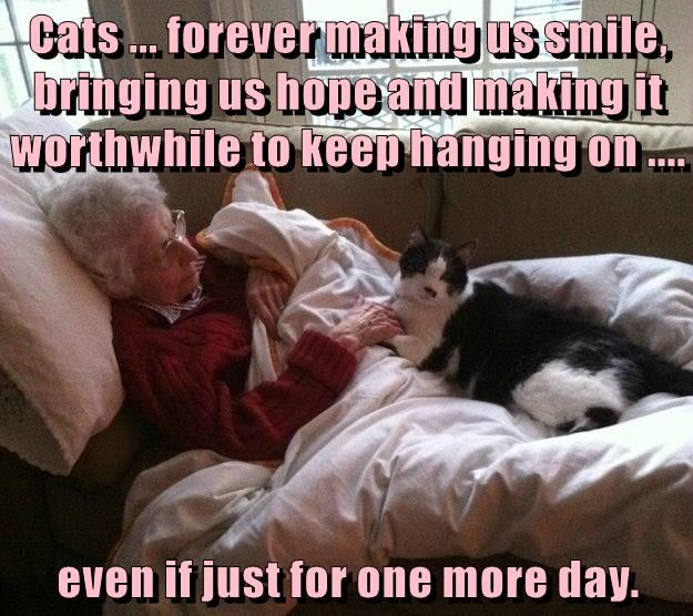 Cats ... forever making us smile, bringing us hope and making it worthwhile to keep hanging on ....  even if just for one more day.