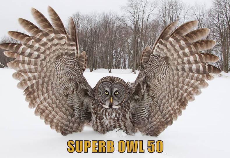 SUPERB OWL 50