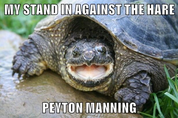 MY STAND IN AGAINST THE HARE  PEYTON MANNING