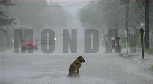 dogs monday rain