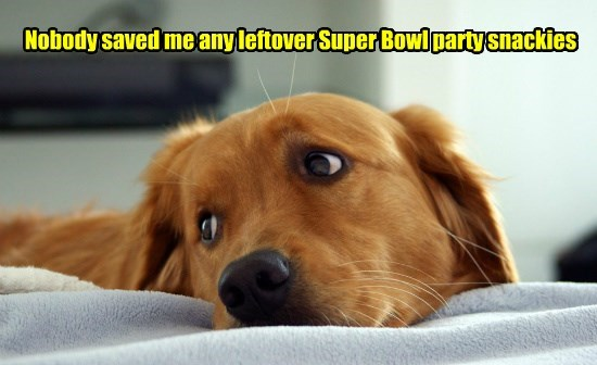 caption,dogs,leftover,snacks,saved,nobody,super bowl