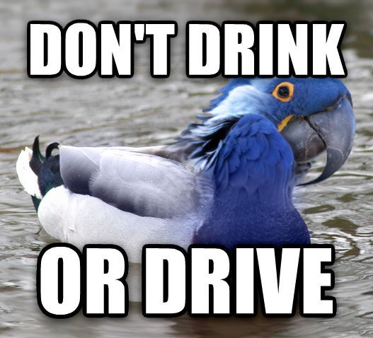 funny memes dont drink or drive paranoid parrot actual advice mallard