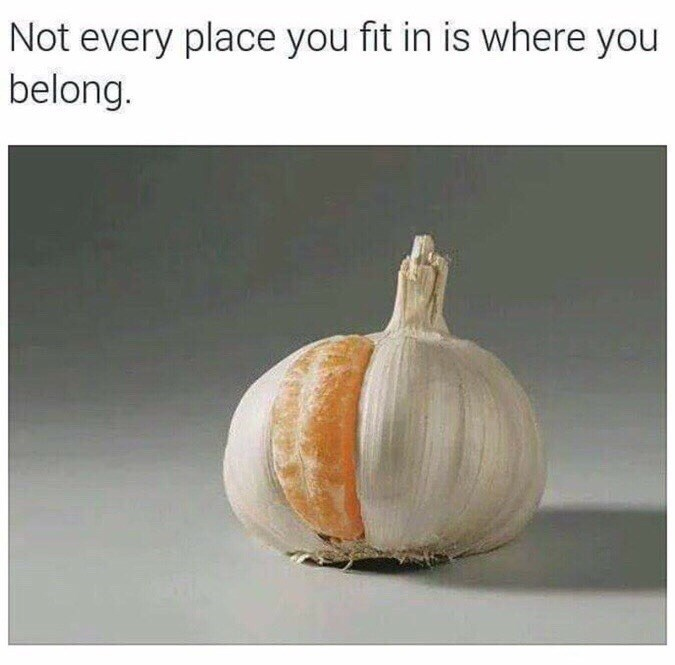 orange in garlic not every place you fit in