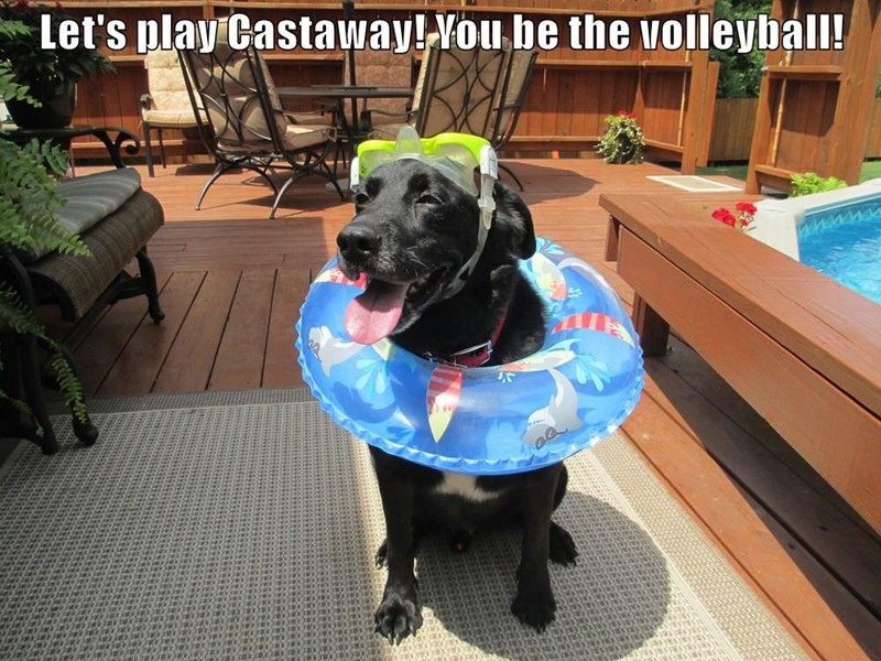 animals you dogs castaway volleyball play caption - 8749320704