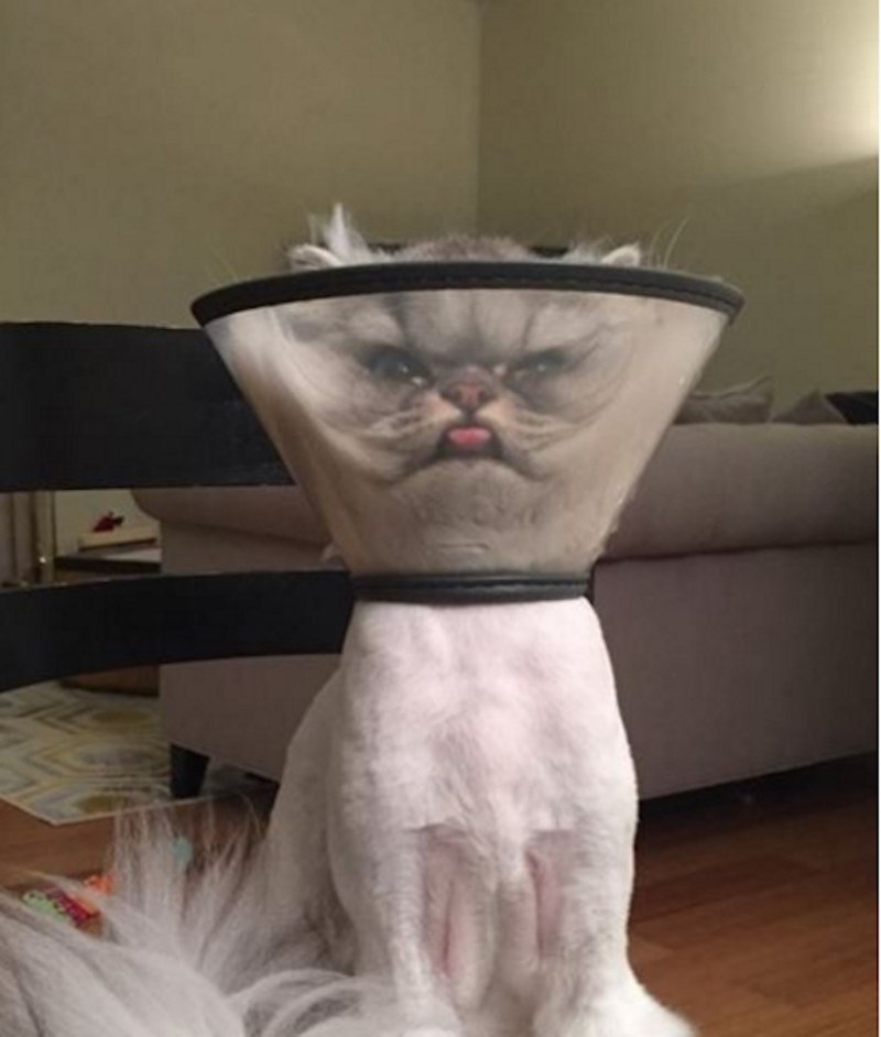 funny cat image post vet shave and cone of shame